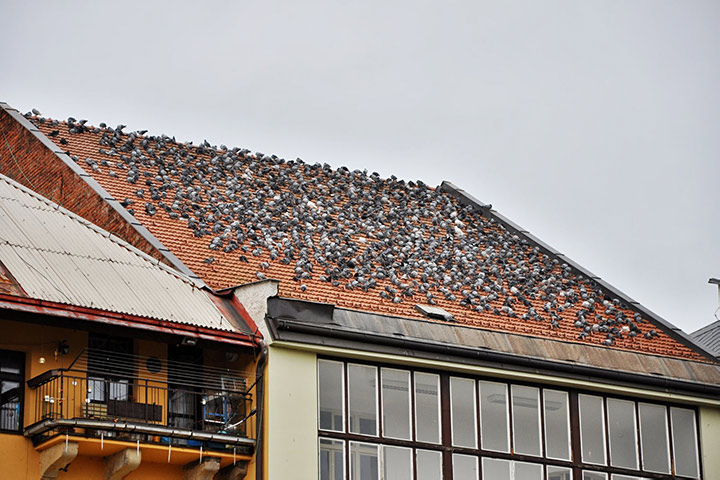 A2B Pest Control are able to install spikes to deter birds from roofs in Wealdstone.