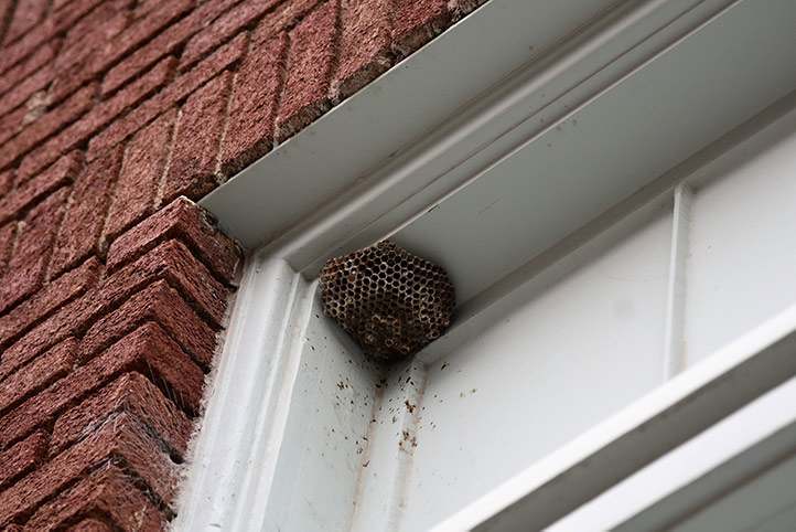 We provide a wasp nest removal service for domestic and commercial properties in Wealdstone.